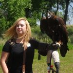 Golden Eagle on display at the Raptor Center