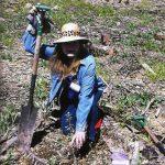 Rusty Holsten - tree planting